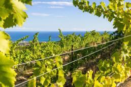 mar i vins a la costa del Maresme amb AlmarBcn
