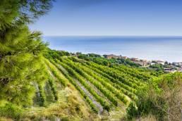 Sea and wines AlmarBcn