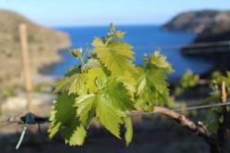 mar y vinos